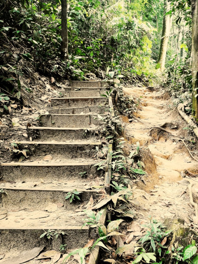 Bukit Gasing trails with steps