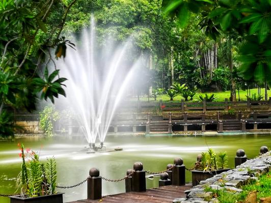 Garden Photography- 7 practical tips for taking better photos