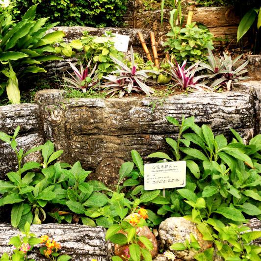 the herbal garden