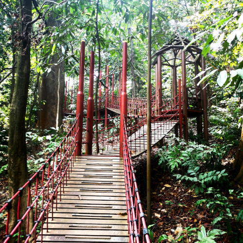 The hanging bridge in the Eco Park