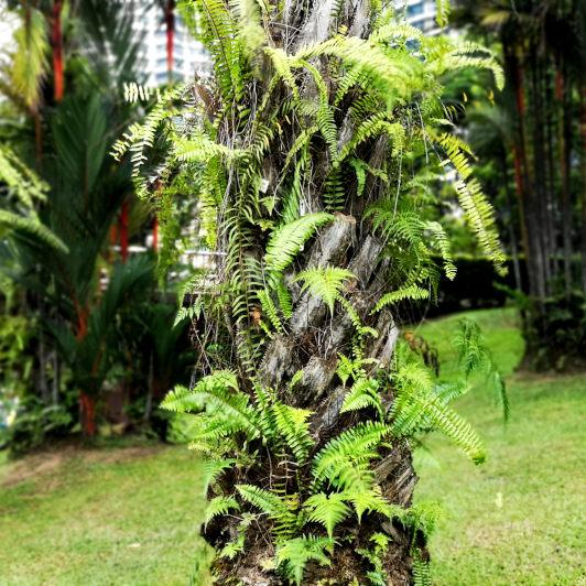Local treee specis Malaysia