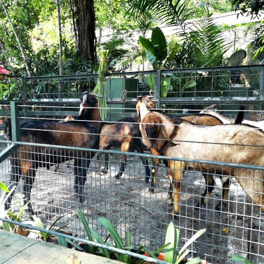Wildlife Park, Sunway Lagoon