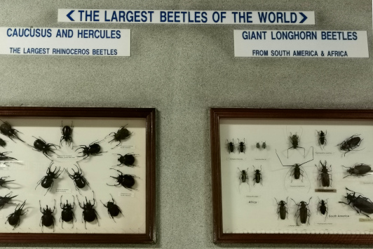 KL Butterfly Park beetles