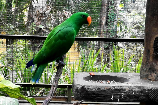 parrots in the Kuala Lumpur bird park